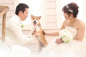 【お客様紹介】帯広店で結婚写真の前撮りをしたお客様の紹介です!!【イッヌ】
