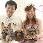 大好きなペットである三匹の犬と一緒に撮影した結婚写真